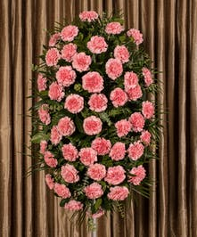 Pink carnation easle spray sends your warmest wishes, just over four feet tall.