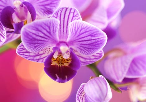 Photograph of purple orchids